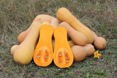 orange-vegetable_winter-squash
