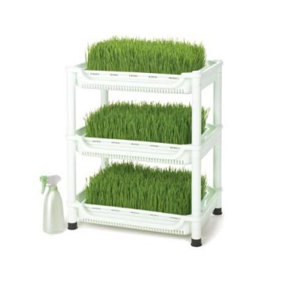 wheatgrasskit